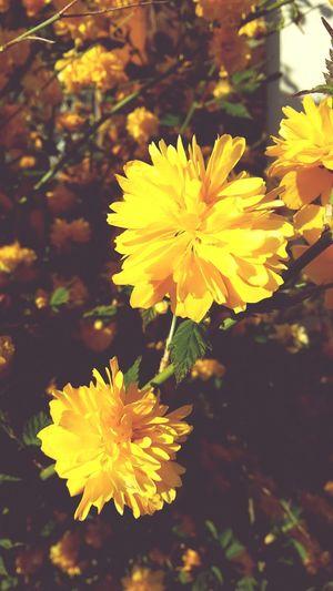 Flowers Sunshine