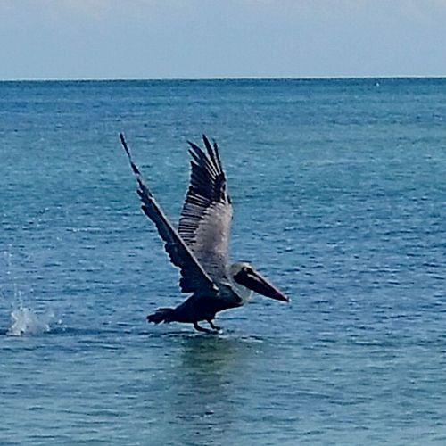 Seaside Birds