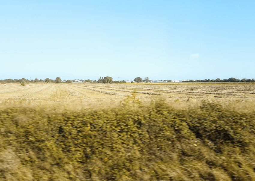 #15768 Agriculture Clear Sky Day Environment Field Horizon Land Landscape Nature No People Non-urban Scene Outdoors Scenics - Nature Sky Train Trip Tranquil Scene Tranquility View From Train View From Train Window