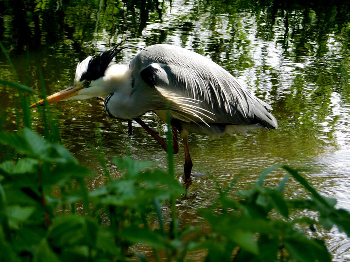 Side view of a bird in lake