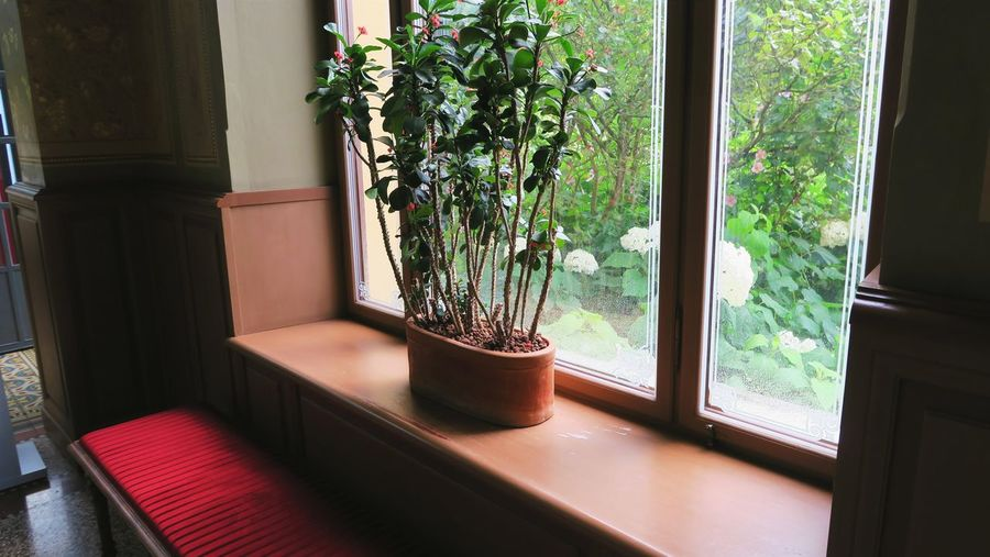 Potted plant by window at home