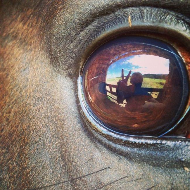 You don't scare me, I ride a mare. 😘 Horse eye portrait. Talent Peace Horseeye Selfie cassiethequarterhorselovehercassiequarterhorseappendixquarterhorsemybabymaremeanmareyoudontscaremeirideamarejustkiddingsheisreallynicemostofthetimesometimes
