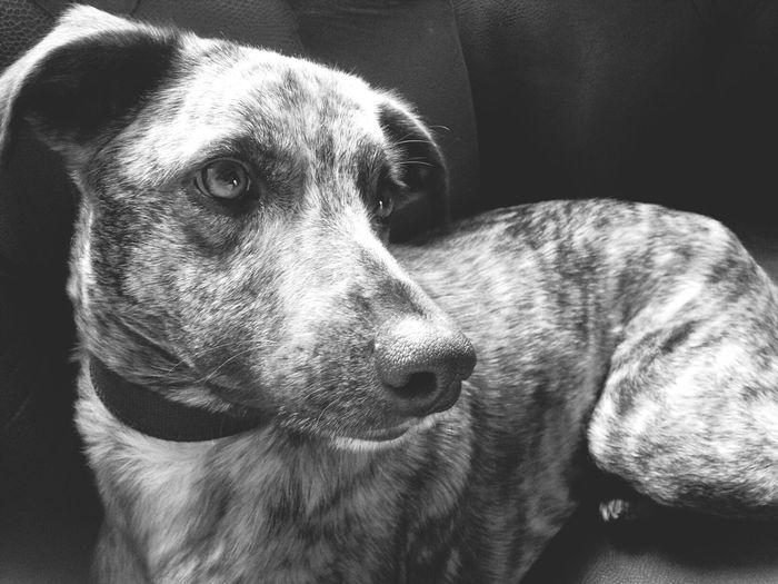 I Love My Dog Monochrome