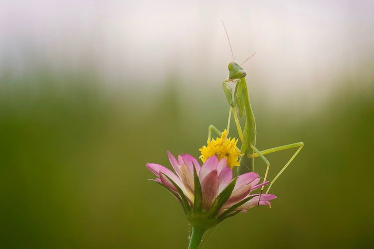 """The Mantis"""