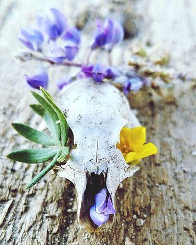 DIY greatful dead Flower Head