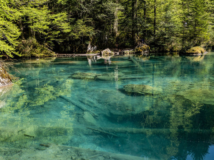 Blausee – Forest Lake Beauty In Nature Blausee Day Forest Lake Lake Switzerland Land Nature No People Outdoors Plant Reflection Scenics - Nature Switzerland Tranquil Scene Tranquility Tree Water Waterfront My Best Photo