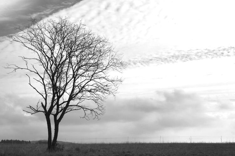 Accents Avalanche  Bare Tree Black And White Cold Temperature Contrast And Lights Dramatic Sky Isolated Landscape Light And Shadow Loudness Rural Scene Silence Silence Of Nature Silence Speaks Silence Speaks When Words Can't Anymore... Silent Moment Silhouettes Simplicity Tranquil Scene Tranquility Tree Trunk