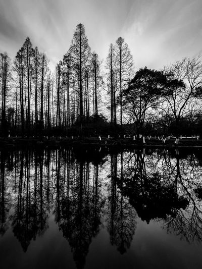 Silhouette trees by lake against sky