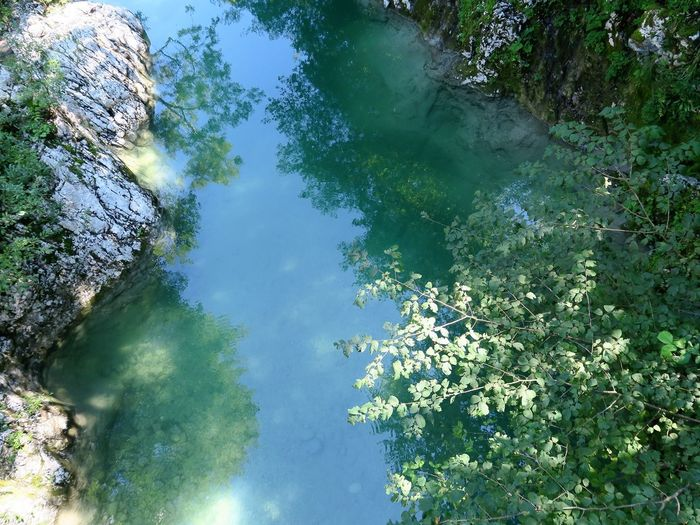 Beauty In Nature Branch Day Flower Freshness Growth High Angle View Lake Leaf Nadiža Nature No People Outdoors Plant Scenics Sky Tranquil Scene Tranquility Tree Water Perspectives On Nature