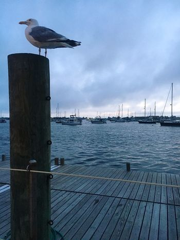 Seagull in the harbor Bird Perching Water No People Cloud - Sky Harbor Seagull Nautical Vessel Wharf