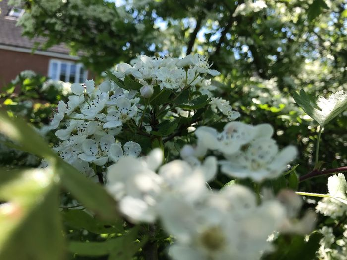 Plant Flowering Plant Flower Growth Beauty In Nature Freshness Fragility
