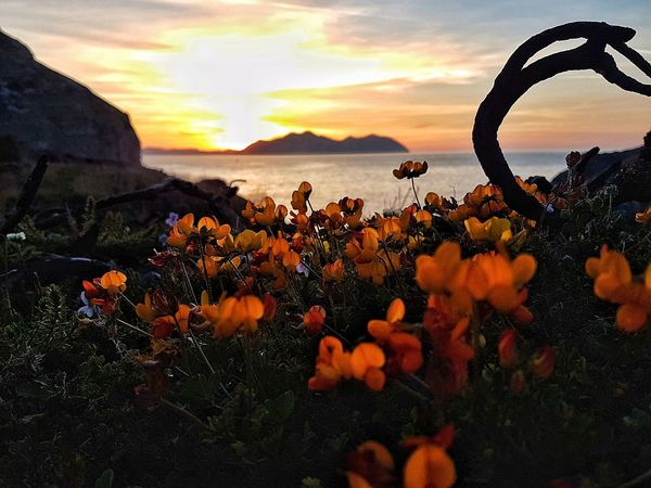 Atardecer Sea Sonabia Castro Urdiales (Cantabria) SPAIN Nature Water Beauty In Nature Sunset Tranquility Flower Horizon Over Water Sky The Week On Eyem Movilephotography Beauty In Nature Sunlight TCPM