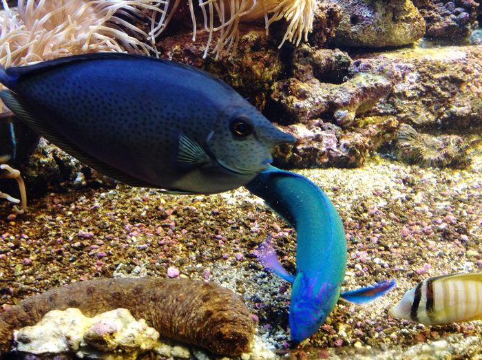 Hello World Fish Exploring
