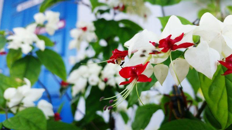 Lovley flowers Flower Pretty Red white Green Plant Leaf Petal blue Blue Door