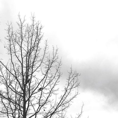 Nature Blackandwhite Tree Birds