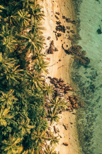 Plant Tree Nature High Angle View Growth No People Day Land Palm Tree Water Tropical Climate Sand Outdoors Green Color Beach Beauty In Nature Sea Thailand Drone  Dronephotography Birds Of EyeEm  Landscape Ocean Clear Water