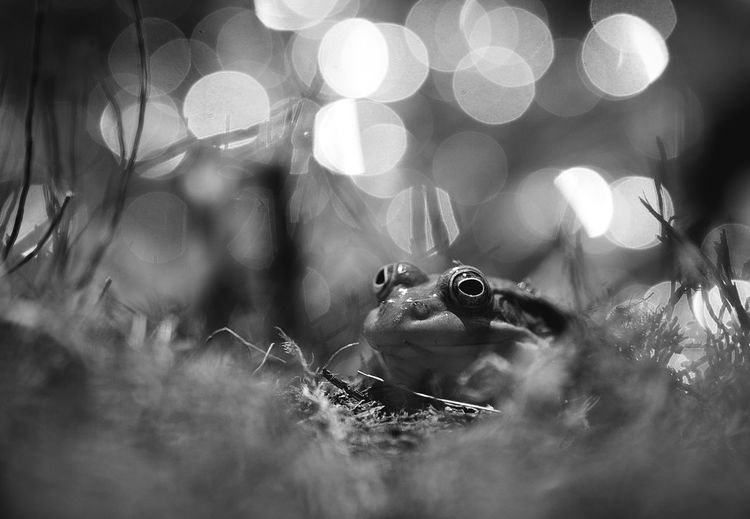 Close-up of frog amidst plants on field