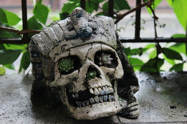 Spooky No People Outdoors Evil Germany🇩🇪 Flowers,Plants & Garden Flower Flowerporn Flower Photography Skulls💀 Skull Face Skull Skull Art Pharao Pharaonic Self Made Self Made!★★