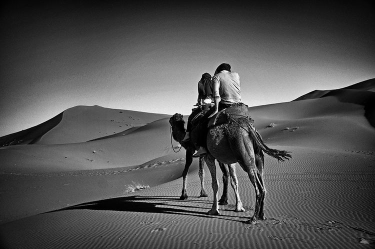 Adventure Buddies Blackandwhite Blackandwhite Photography Camel Riding Desert Dunes Of Merzouga Travel Photography Travelingtheworld  Travellers Caravan Sahara - Erg Chebbi Morroco