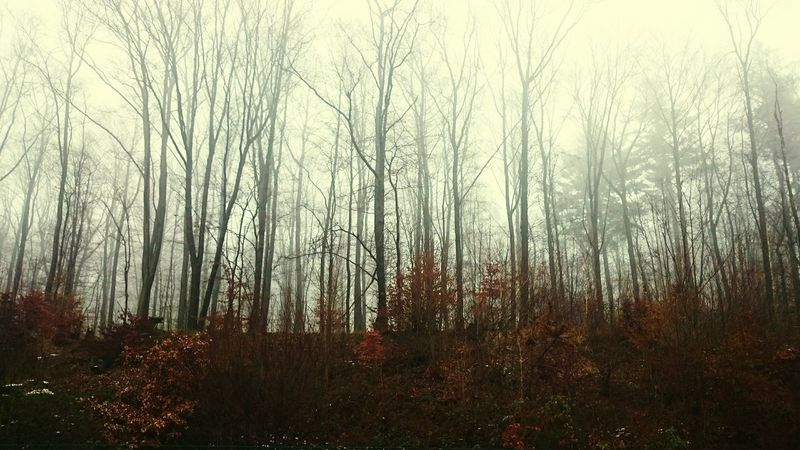 just fog Autobahn