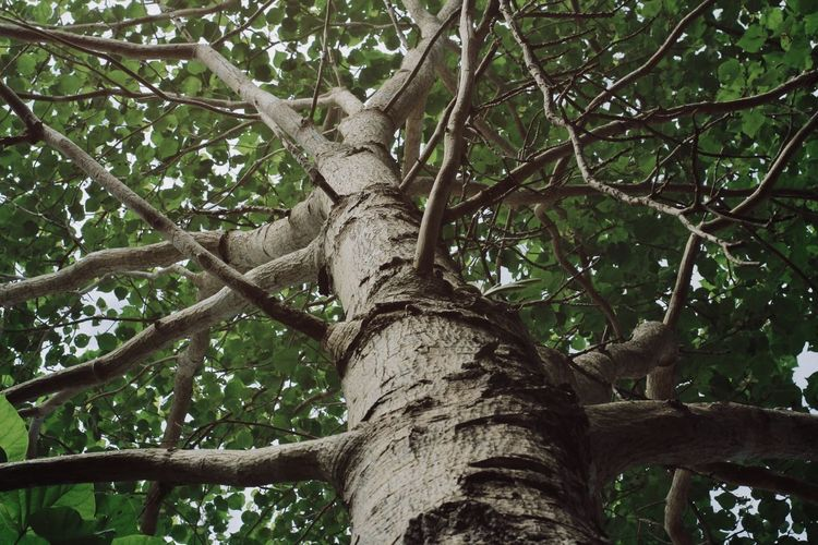 Low angle view of squirrel on tree