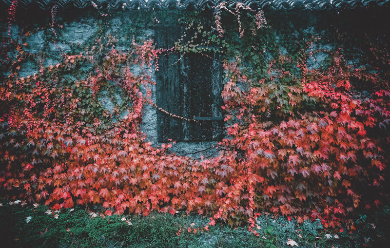 View of flowering plants by wall