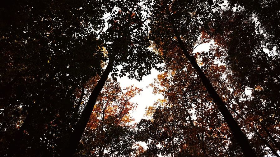 autum colours View Scenics EyeEm EyeEmNewHere EyeEm Best Shots Beautiful Calmness Of Nature Ambiance Ambient Light colour of life Live Authentic Live Moments Light And Shadow Tree Backgrounds Full Frame Close-up Sky Silhouette Branch Orange Color Tree Trunk Sunset Tranquility Growing Abstract Backgrounds Calm Sun Woods Streaming
