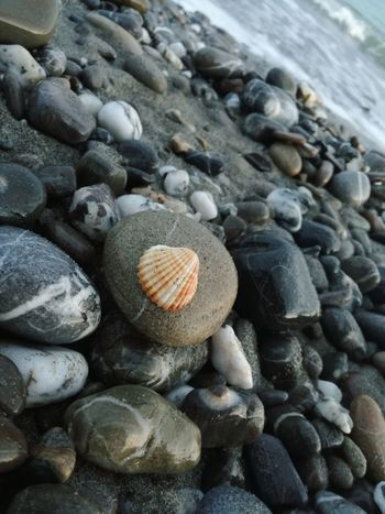 Emotional Photography Emotion Perfume Breeze Conch Reef Sand Summertime Summer Summer ☀ Summer2018 Stones Stones & Water Waves EyeEm Nature Lover EyeEm Best Shots - Nature Pebble Beach Beach Pebble Seashell Close-up Shell Sandy Beach