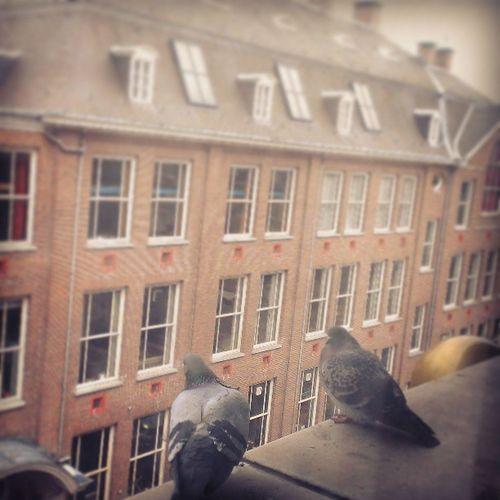 ハトがわたしの部屋で雨宿っている(;・∀・)