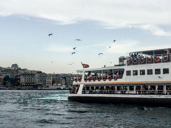 Istanbul Water Ship Sky Bird Flying Bosphorus Naturel City