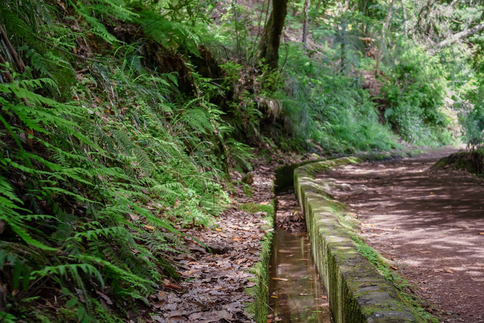 Levada walk, forest trail in Madeira island , Portugal. Levada Walks Madeira Madeira Island Portugal Beauty In Nature Forest Forest Photography Green Color Growth Irrigation System Landscape Levada Levada Madeira Levada Walk Nature No People Outdoors Park Plant Scenics Tree