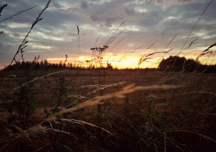 Sunset on polish field Sunset Nature Landscape Silhouette Scenics Plant Grass Outdoors Multi Colored Wilderness Area Growth Day Beauty In Nature Cloud - Sky Sky Forest Country Polska łąka Polska łąka Zachód Słońca Wies Trawy Grassland Grass And Sky