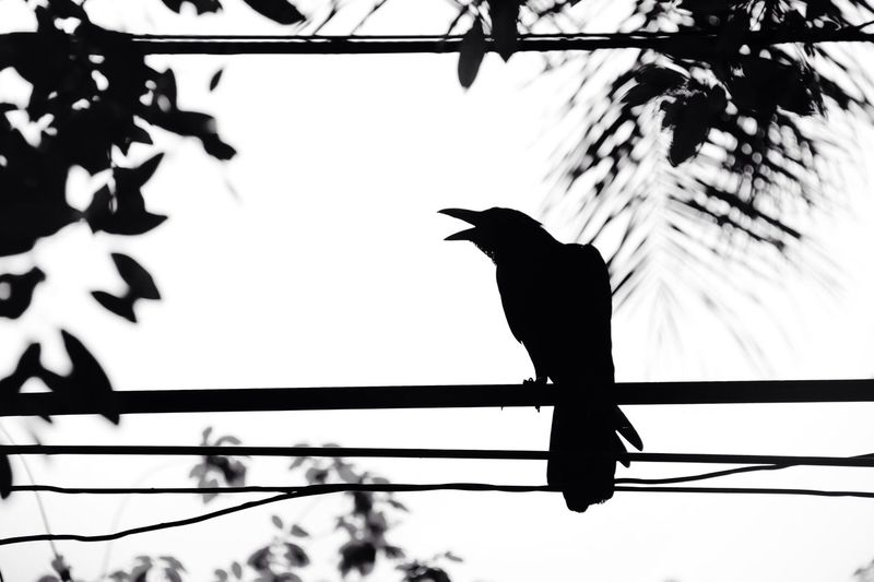 Black and White Blackandwhite Bird Dark Animal Themes Wildlife Zoology Nature