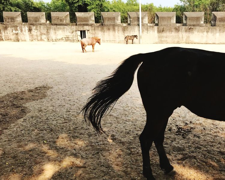 Pony tail Silhouette Horse Horse Photography  Horse Tail Tail Animal Tail Ponytail Tail Animal Themes Domestic Animals Mammal Livestock One Animal Day Outdoors Nature Animals In The Wild