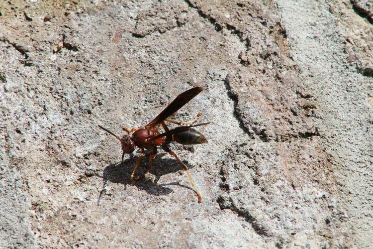 Wasp Sand