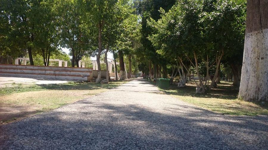 Bosque Venustiano Carranza Torreón, Coahuila Comarca Lagunera