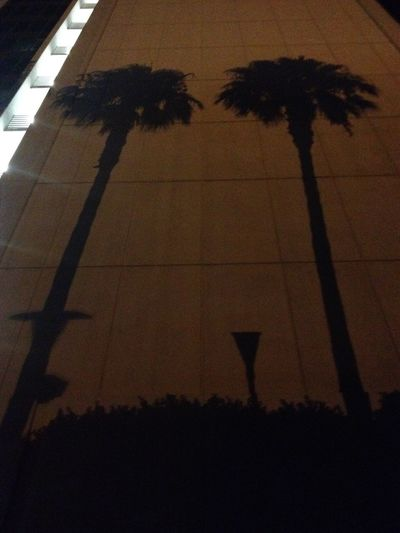 No hands with their palm shadows Palm Trees Shermanoaks Building Shadows Cities At Night Cities_collection