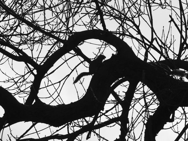 Branch Outdoors Nature Beauty In Nature No People Not Cropped Squirrel Black And White Silhouette