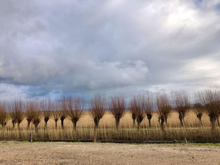 Trees on field against sky