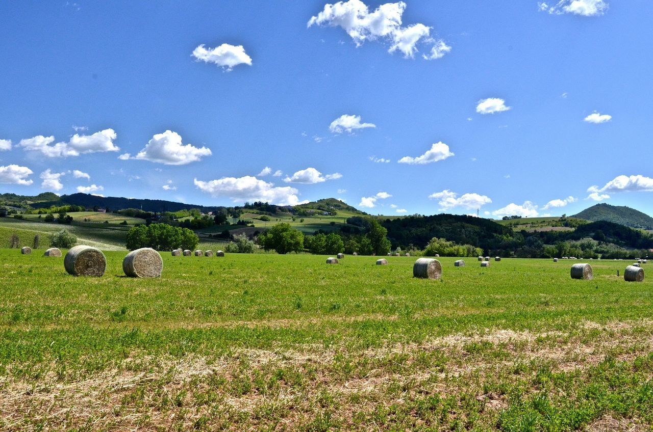 bale, land, field, hay, sky, landscape, plant, agriculture, environment, tranquil scene, rolled up, tranquility, beauty in nature, rural scene, nature, farm, day, scenics - nature, cloud - sky, no people, outdoors