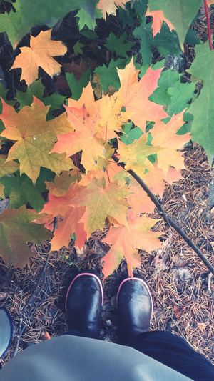 Colors Of Autumn Saappaat From Where I Stand