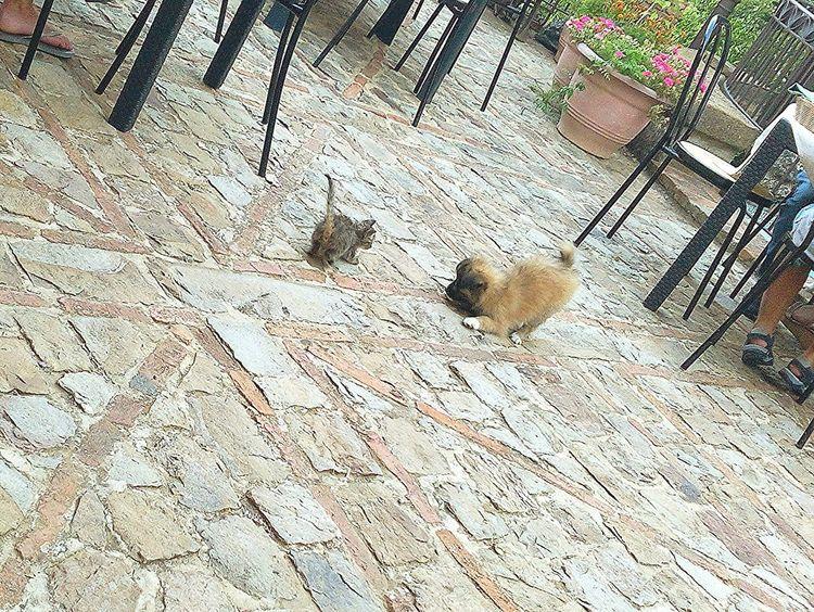 Babycat Babydog Cute Animals Animalslove Taking Photos Summer2015 Sicily Summertime Plaing Time