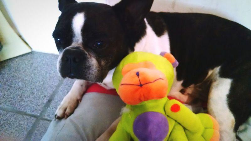 I Love My Dog Baby Darthvader Dart Love Dog❤ Goodnight Pretty Children Little 🐶