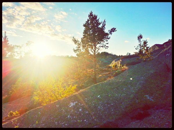 Sun_collection 25 Days Of Summer Sunset EyeEm Nature Lover