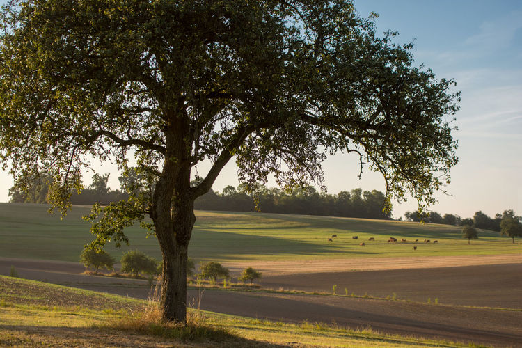 Agriculture Beauty In Nature Branch Day Evening Light Footpath Green Green Color Growing Growth Landscape Lothringen Nature No People Non-urban Scene Outdoors Plant Remote Rural Scene Scenics September Solitude Tranquil Scene Tranquility Tree