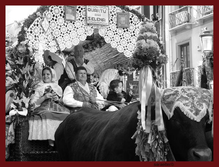 Sardegna, festa di Sant'Efisio, patrono di Cagliari A maggio a Cagliari parte la processione di Sant'Efisio martire, cui partecipano da millenni tutti i gruppi folcloristici e tutti i paesi della regione, ognuno con i propri costumi tradizionali. Le donne cantano lodi, gli uomini si occupano dei cavalli e dei carri tirati dai buoi per quattro giorni, quando la statua, dopo essere stata benedetta in mare, torna nella chiesa al santo intitolata. Sfilata di partenza, 1 maggio Sardinia, feast of Sant'Efisio, patron saint of Cagliari In May, in Cagliari, the procession of martyr Saint'Efisio, to which take part for thousands of years folkloristic groups coming from all the villages of the region, all wearing their traditional dress, start from the cathedral . Women sings praises, men take care of horses and wagons pulled by oxen for four days, when the statue, after being blessed in the sea, returns to his church in the middle of the city 1 May Departure parade early in the morning Man Traditional Clothing Animal Themes Bue Addobbato Catholic Church Folk Grou Folklore Holy Procession Martyr Oxen People Santa Processione Santorini Traadition Traditional Dress Traditional Family Women