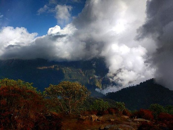 It was a Time when We just started to get over the Clouds and the Cloud was in Competition with us. Though the clouds did win the match. But we did Win the Moment . Those Unforgettable Moments will just be the FragmentsOfTime that we lived up there and left up there too. It was on the Way to Dzongri (Sikkim ). It was the True Color of Nature which made the Hostile Situations easy and Comfortable for us and the Landscape was Changing within Fractions of seconds. Instashot Instamoment GoechaLA2015 trekking trek travelDiaries Travel GoechaLA