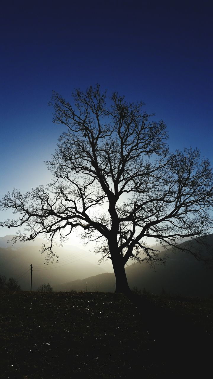 bare tree, lone, tree, tranquility, majestic, isolated, landscape, beauty in nature, branch, nature, tranquil scene, outdoors, tree trunk, blue, clear sky, no people, scenics, sky, day