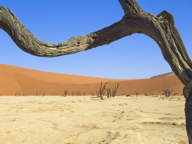 Dead Vlei in Namib Naukluft National Park - Namibia Arid Climate Beauty In Nature Clear Sky Day Dead Tree Dead Vlei Desert Desert Drought Landscape Namibia Nature Naukluft Natio Naukluft National Park No People Outdoors Physical Geography Sand Sand Dune Scenics Sky Tranquil Scene Tranquility Tree