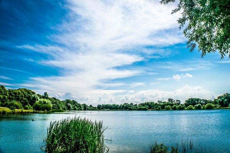 Scenic view of lake and plants against cloudy sky